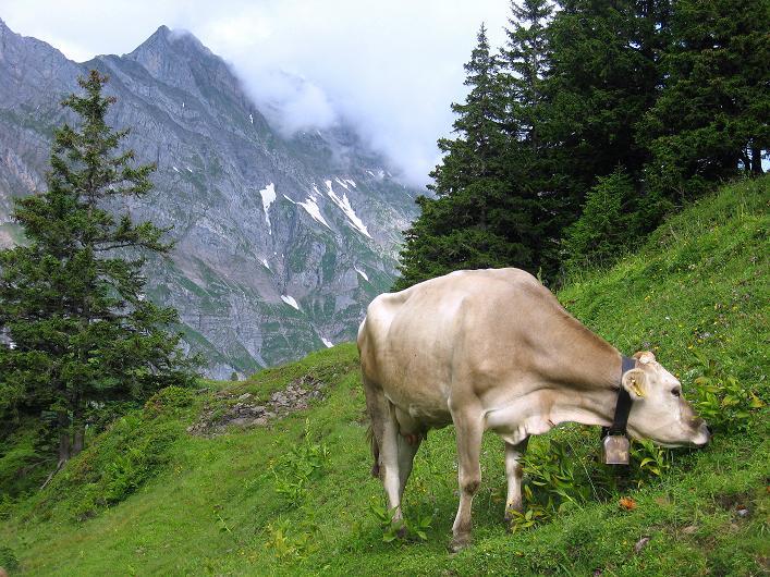 Foto: Andreas Koller / Klettersteig Tour / Klettersteig Graustock (2662 m) / 15.07.2009 23:58:01