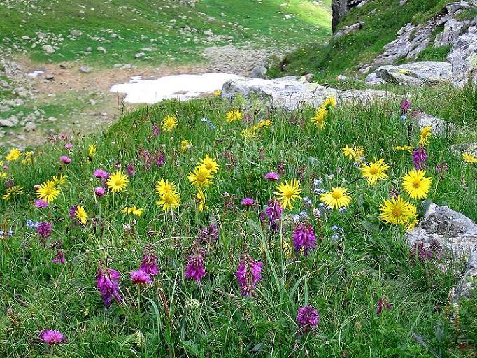 Foto: Andreas Koller / Wander Tour / Schöderkogel über S-Grat und NW-Grat (2500m) / Romantisches Katschtal / 18.07.2009 19:52:45