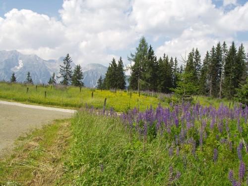 Foto: hofchri / Mountainbike Tour / Planai (1906 m) von Schladming mit Downhillstrecke / 11.08.2009 20:32:18