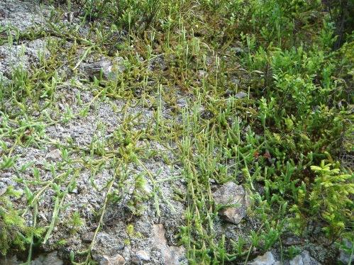 Foto: hanna84 / Wander Tour / Auf den Rittisberg / 20.07.2009 20:52:02