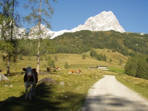Foto: hofsab / Mountainbike Tour / Filmooser Almentour über Hofalmen und Sulzenalm (1612 m) / steile Forststraße zur Sulzenkaralm / 26.08.2009 12:43:58