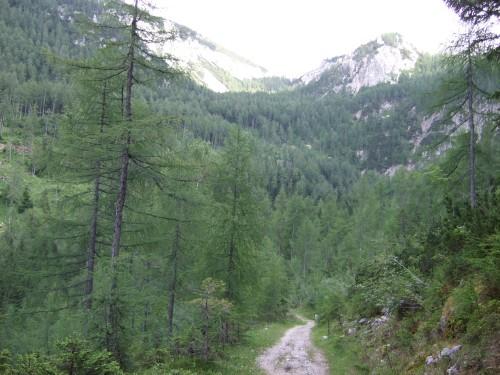 Foto: hofsab / Mountainbike Tour / Huttererböden (1404 m) von Hinterstoder über Steyerbergerreith / schmaler Weg zur Edtbauernalm / 25.08.2009 13:09:26