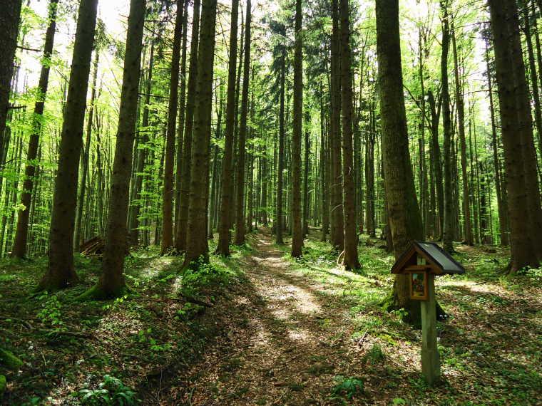 Foto: Günter Siegl / Wander Tour / Von Oberwang auf die Kulmspitze / Alternativer Anstieg/Abstieg über den Kreuzweg / 03.05.2015 13:23:36