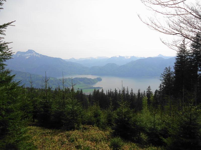 Foto: Günter Siegl / Wander Tour / Von Oberwang auf die Kulmspitze / Spärliche Aussichten entlang des Kamms / 03.05.2015 13:22:09
