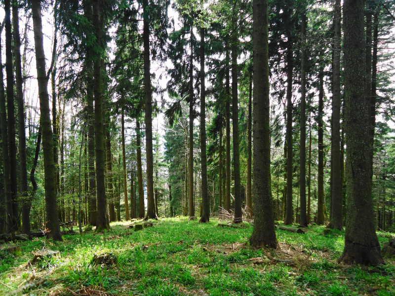 Foto: Günter Siegl / Wander Tour / Von Oberwang auf die Kulmspitze / 360-Grad Waldpanorama am Gipfel / 03.05.2015 13:21:09