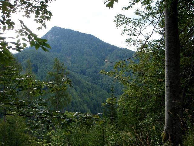 Foto: berglerin / Wander Tour / Oistra (1577m) / Ojstra / 25.07.2009 13:34:05