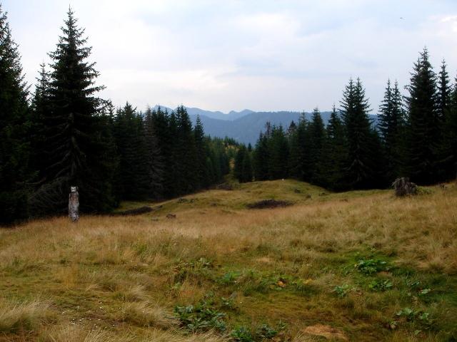 Foto: berglerin / Wander Tour / Steinberg, 1655m / 28.07.2009 21:02:48