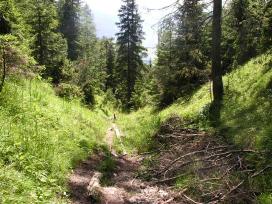 Foto: skisprungschanze.com / Wander Tour / Persaifoissel, von Steinalm zur Peter Wiechenthaler Hütte / schmaler Weg, etwas hohe Tritte / 01.08.2009 17:41:34