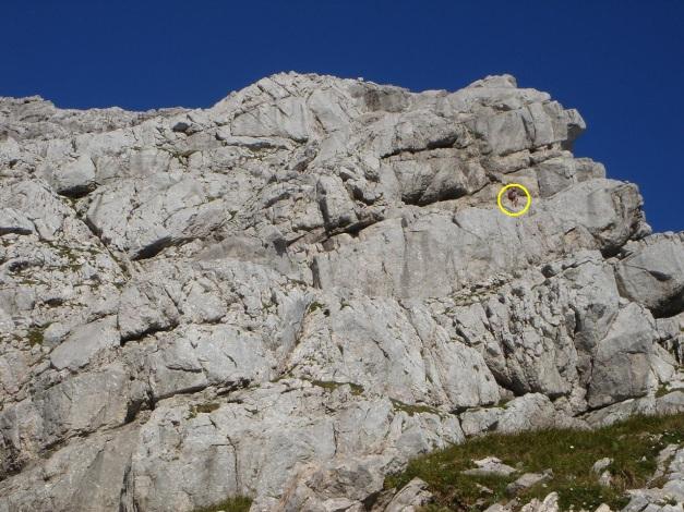 Foto: Manfred Karl / Klettersteig Tour / Schermberg, Tassilo Klettersteig / Gestuftes Gelände nach dem grasigen Rücken / 02.08.2009 21:01:03