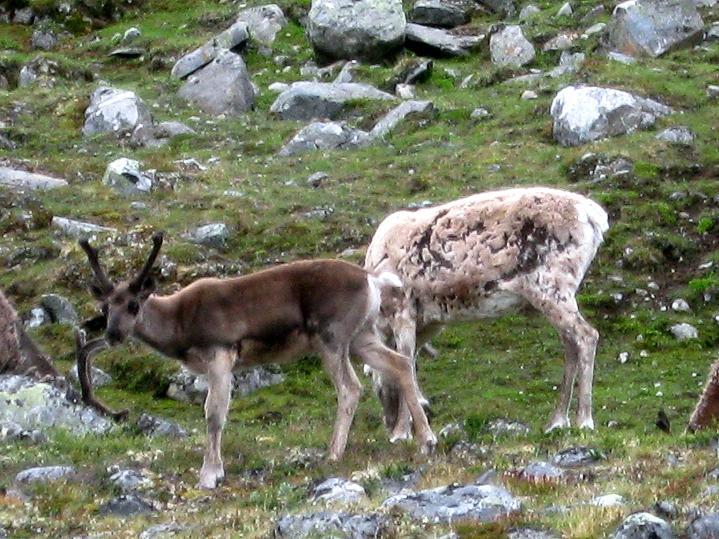 Foto: Andreas Koller / Wander Tour / Von Spiterstulen auf den Glittertind (2465 m) / 05.08.2009 19:02:17