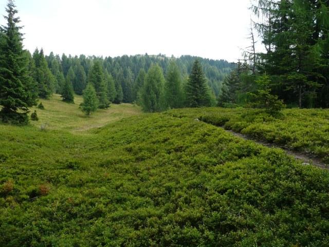 Foto: berglerin / Wander Tour / Palnock (1901m) / 03.08.2009 20:16:25