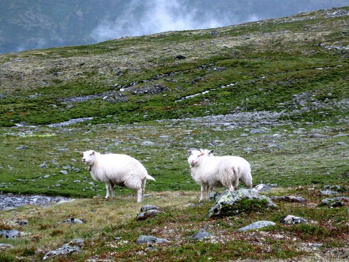 Foto: Andreas Koller / Wander Tour / Galdhopiggen (2469m) - Gletschertour auf den höchsten Berg Nordeuropas  / 07.08.2009 01:13:05