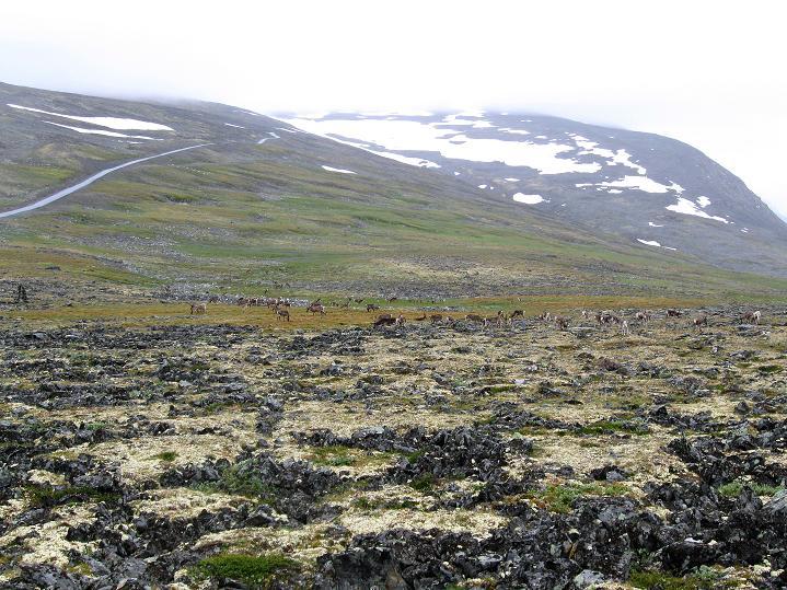 Foto: Andreas Koller / Wander Tour / Galdhopiggen (2469m) - Gletschertour auf den höchsten Berg Nordeuropas  / 07.08.2009 01:13:00
