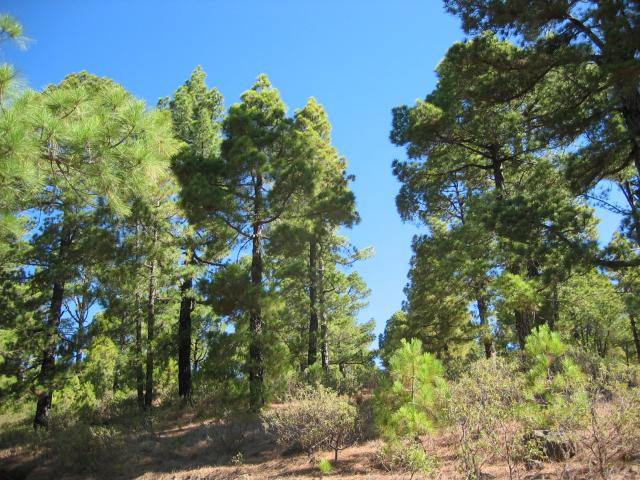 Foto: elipes / Wander Tour / Pico Bejenado / Aufstieg zum Bejenado / 04.08.2009 12:14:04