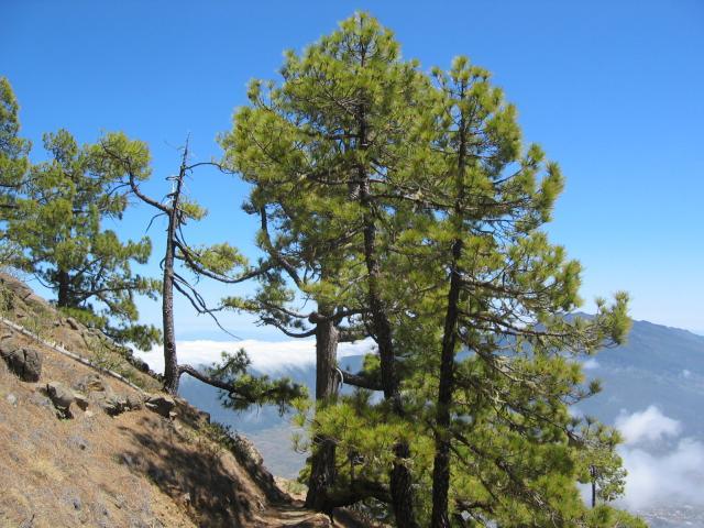 Foto: elipes / Wander Tour / Pico Bejenado / Abstiegsweg / 04.08.2009 12:23:56