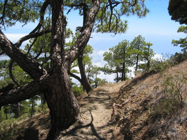 Foto: elipes / Wander Tour / Pico Bejenado / Aufstieg zum Gipfel / 04.08.2009 12:26:11