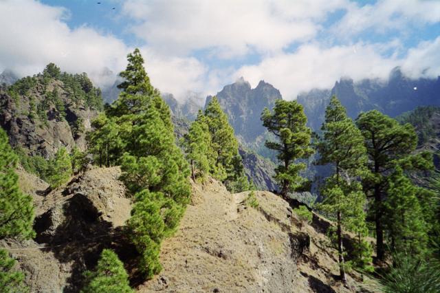 Foto: elipes / Wander Tour / Von Los Brecitos durch die Caldera / Abstiegsweg / 11.08.2009 08:48:54
