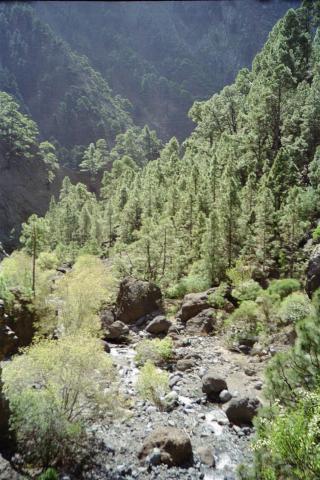 Foto: elipes / Wander Tour / Von Los Brecitos durch die Caldera / Steil runter zum Fluss / 11.08.2009 08:49:18