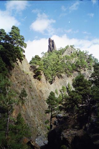 Foto: elipes / Wander Tour / Von Los Brecitos durch die Caldera / Im Barranco / 11.08.2009 08:49:31