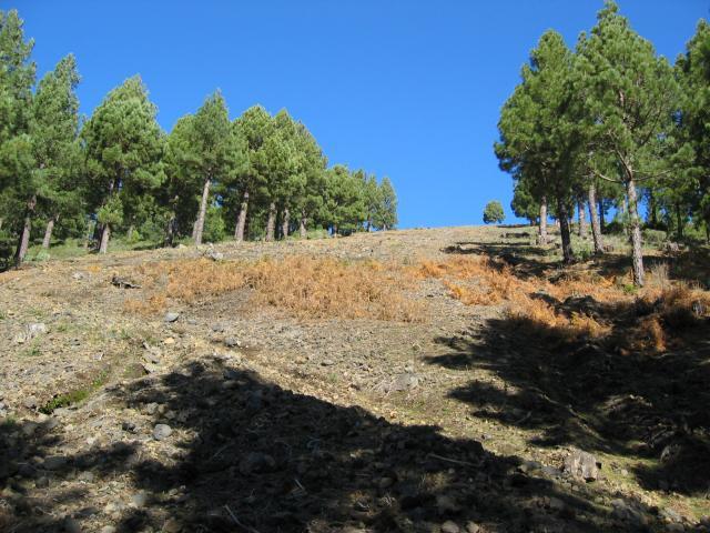Foto: elipes / Wander Tour / Birigoyo / Abstieg vom Birigoyo / 04.08.2009 16:33:33