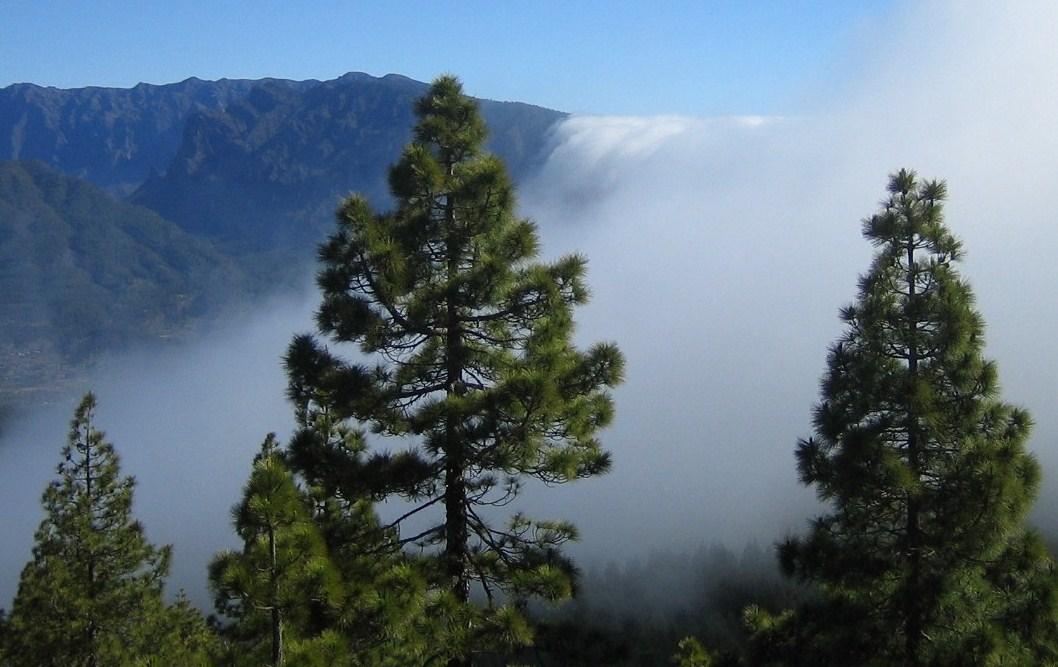 Foto: pele62 / Wander Tour / Vulkanroute / Zu Beginn der Vulkanroute konnten wir den für La Palma berühmten Wolkenwasserfall bewundern. Von Osten her