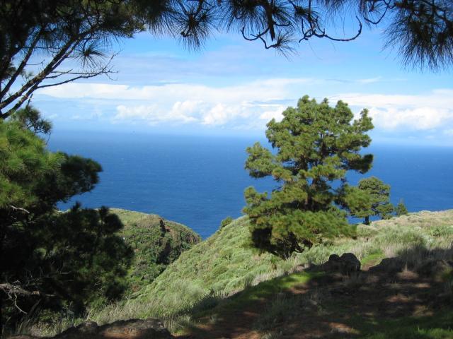 Foto: elipes / Wander Tour / Von Las Tricias zur Lomada Grande / Weg zur Lomada Grande / 04.08.2009 12:33:33