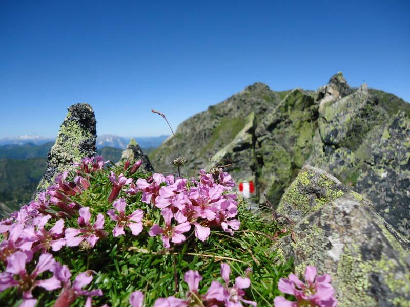 Foto: Günter Siegl / Wander Tour / Über den Gefrorenen See zum Dreistecken-Grat (2449 m) / 04.08.2013 13:11:04
