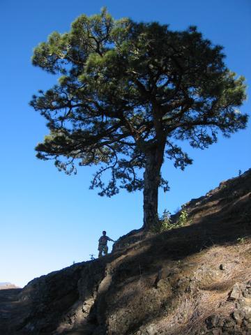 Foto: elipes / Wander Tour / Von der Ermita Virgen del Pino zur Punta de los Roques / Am Aufstiegsweg zum Reventonpass / 10.08.2009 19:43:08