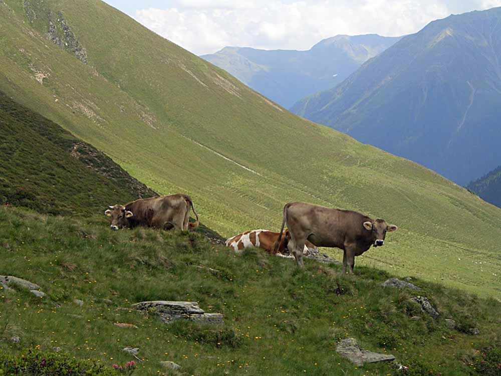Foto: vince 51 / Wander Tour / Vom Kühtai auf den Rietzer Grieskogel / 11.08.2009 22:49:52