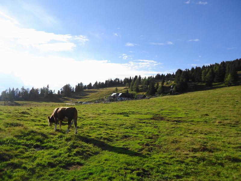 Foto: Günter Siegl / Wander Tour / Familienwanderung im Naturpark Grebenzen / Dreiwiesenhütte / 31.08.2014 21:08:48