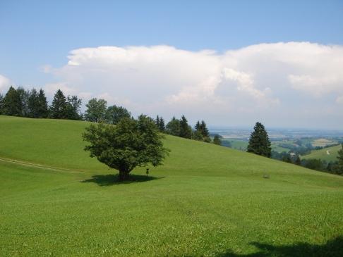 Foto: hanna84 / Wander Tour / Auf das Kruckenbrettl / Bei der Abzweigung des Hubertussteiges / 24.08.2009 19:02:42