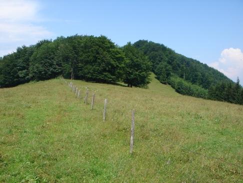 Foto: hanna84 / Wander Tour / Auf das Kruckenbrettl / Wiese südlich vom Kruckenbrettl / 24.08.2009 18:59:58