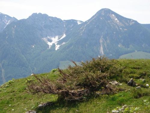 Foto: hanna84 / Wander Tour / Familientaugliche Almwanderung zur Thorhöhe / Braunedelkogel / 25.08.2009 20:34:33