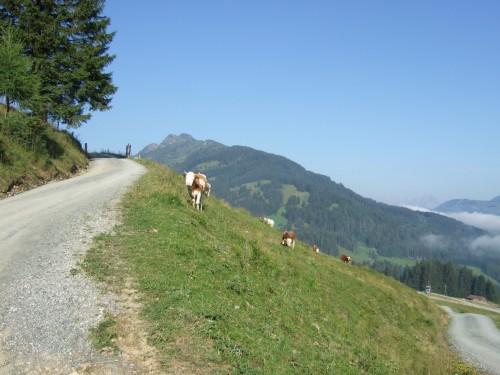 Foto: hofsab / Mountainbike Tour / Rund um das Spielberghorn über Asitzkopf (1914 m) und Schreiende Brunnen / kurz nach der Forsthofalm / 28.08.2009 18:56:09
