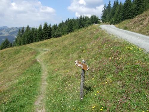 Foto: hofsab / Mountainbike Tour / Rund um das Spielberghorn über Asitzkopf (1914 m) und Schreiende Brunnen / wer suchet der findet - einen Trail / 28.08.2009 19:06:20