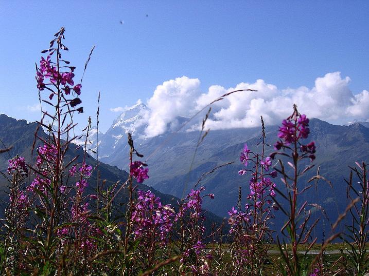 Foto: Andreas Koller / Wander Tour / Bella Tola - Aussichtsbalkon der Walliser Alpen (3026 m) / 05.09.2009 18:50:13