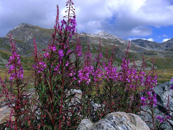 Foto: Andreas Koller / Wander Tour / Bella Tola - Aussichtsbalkon der Walliser Alpen (3026 m) / 05.09.2009 18:38:59