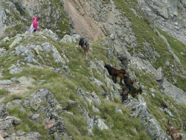 Foto: Manfred Karl / Wander Tour / Klettersteigdreitausender über dem Halsljoch / Auch mit solchem Gegenverkehr ist zu rechnen / 31.08.2009 16:11:17