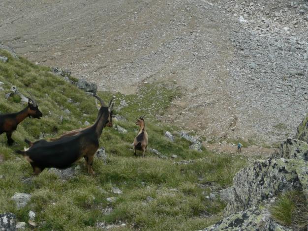 Foto: Manfred Karl / Wander Tour / Klettersteigdreitausender über dem Halsljoch / 31.08.2009 16:10:46