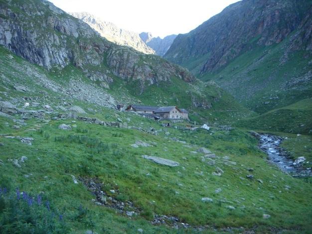Foto: Manfred Karl / Wander Tour / Eindrucksvoller Dreitausender über dem Vinschgau / Zielalm / 31.08.2009 16:31:26