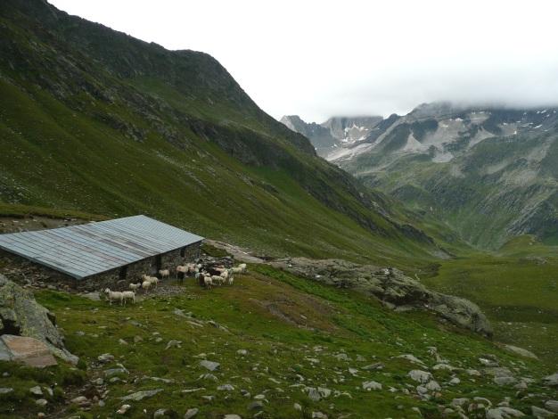 Foto: Manfred Karl / Wander Tour / Einsamer Dreitausender von der Lodnerhütte / Kälberalm / 31.08.2009 16:03:51