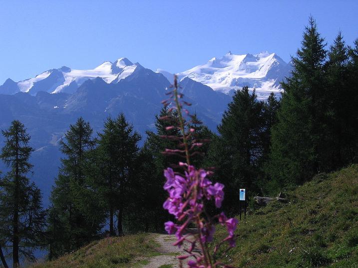 Foto: Andreas Koller / Wander Tour / Über den Augstbordgrat auf das Dreizehntenhorn (3052 m) / Walliser Eisriesen in der Mischabelkette (4545 m) / 07.09.2009 21:43:29