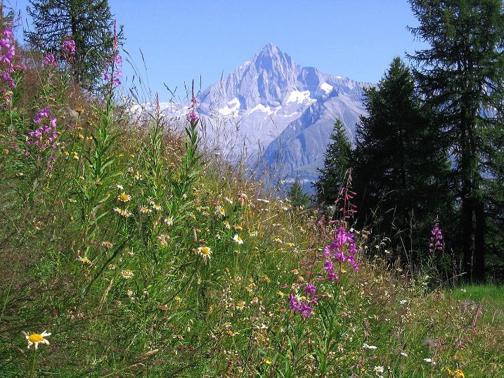 Foto: Andreas Koller / Wander Tour / Über den Augstbordgrat auf das Dreizehntenhorn (3052 m) / Bietschhorn (3934 m) / 07.09.2009 21:44:38