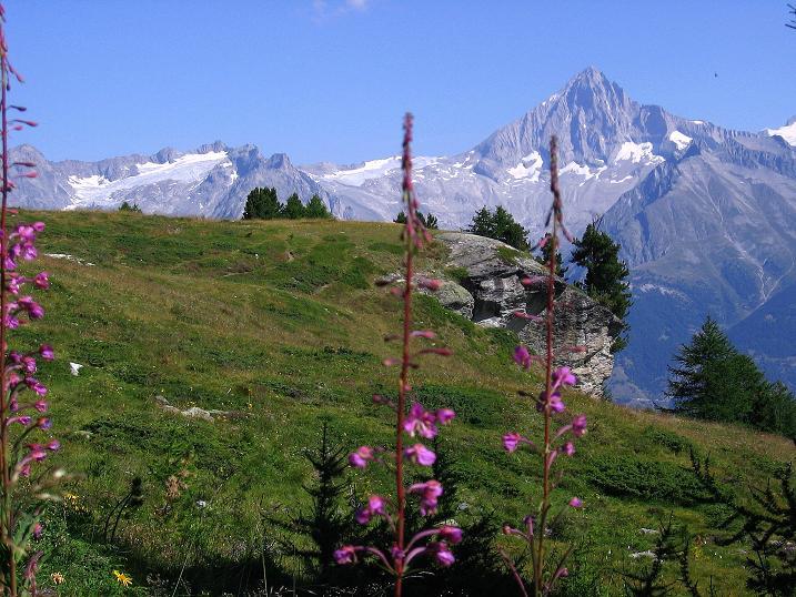Foto: Andreas Koller / Wander Tour / Über den Augstbordgrat auf das Dreizehntenhorn (3052 m) / 07.09.2009 21:42:14