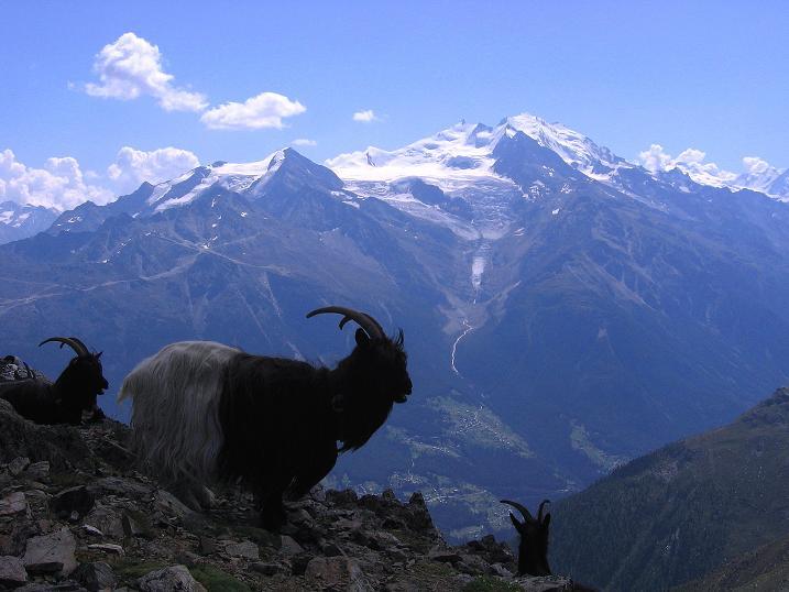 Foto: Andreas Koller / Wander Tour / Über den Augstbordgrat auf das Dreizehntenhorn (3052 m) / 07.09.2009 21:34:02