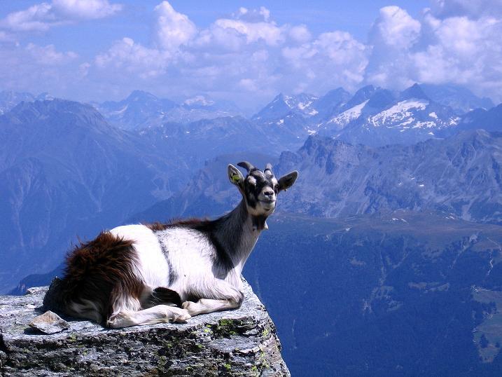 Foto: Andreas Koller / Wander Tour / Über den Augstbordgrat auf das Dreizehntenhorn (3052 m) / 07.09.2009 21:33:18