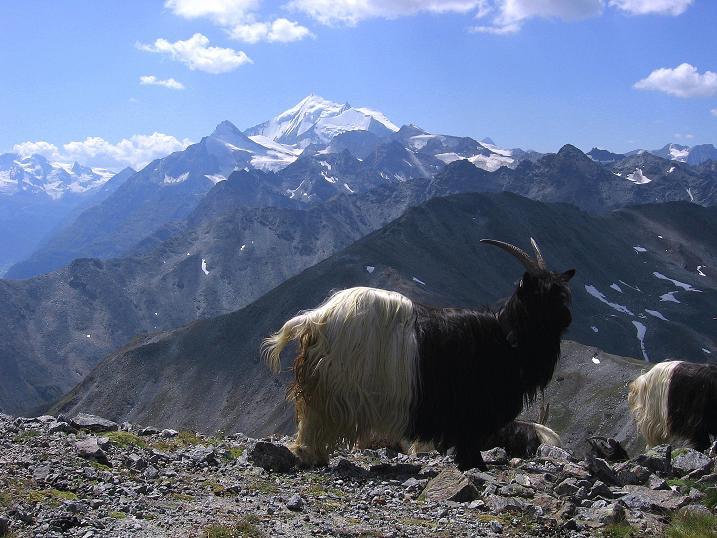 Foto: Andreas Koller / Wander Tour / Über den Augstbordgrat auf das Dreizehntenhorn (3052 m) / 07.09.2009 21:33:10