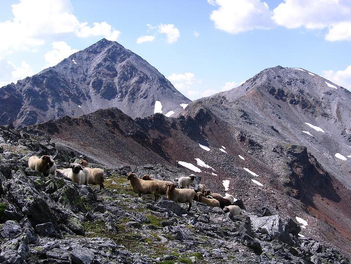 Foto: Andreas Koller / Wander Tour / Über den Augstbordgrat auf das Dreizehntenhorn (3052 m) / 07.09.2009 21:26:58