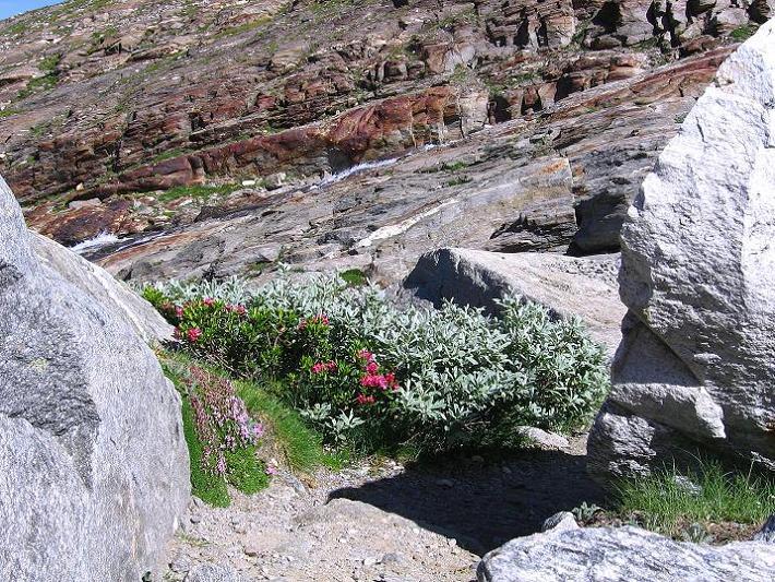 Foto: Andreas Koller / Wander Tour / Vom Simplonpass auf das Wasenhorn (3246 m) / 09.09.2009 23:57:24
