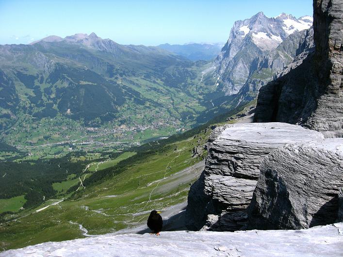 Foto: Andreas Koller / Klettersteig Tour / Klettersteig Rotstock (2663 m) / Schwarzhorn (2928 m), Grindelwald und Wetterhorn (3701 m) / 05.09.2009 02:12:07